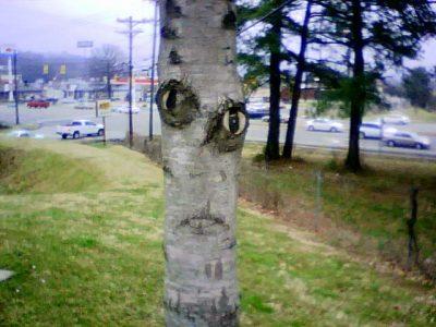 creepytree030109a