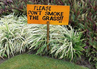 please-dont-smoke-the-grass