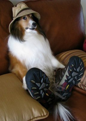 silly-dog-those-are-people-cloths