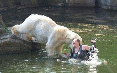 hippo-vs-bear