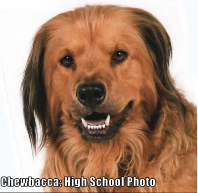 Chewbacca High School Photo