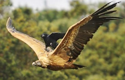 get this bird off my back