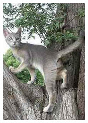 cat remains in tree
