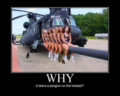 why is there a penguin on the helipad