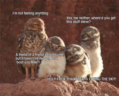 when owls get high