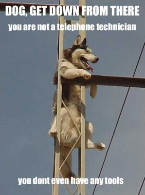 dog get down from there you are not a telephone technician